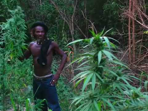 Jamaican Jungle
