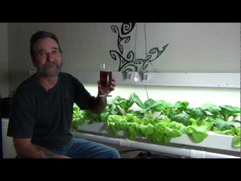 Hydroponic Greenhouse Project, Indoor Nft Pac Choy And Lettuce For Winter Eats