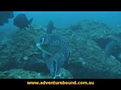 Adventure Bound SCUBA Dive Byron Bay Video