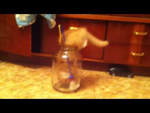 Kot kontra słoik