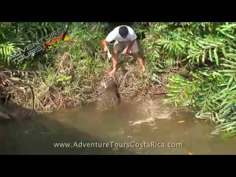 Crocodile Tour | Costa Rica Adventure Tours | Jaco | Los Suenos