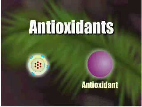 0 How antioxidants work