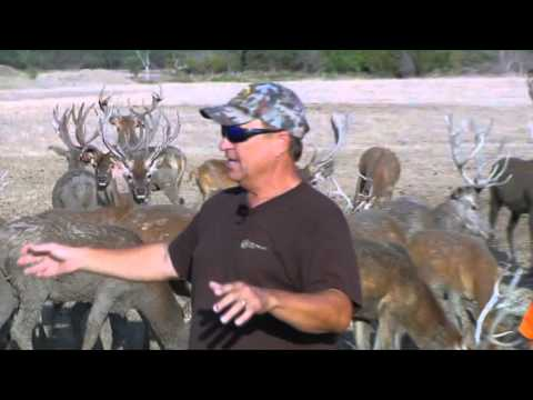 Like Driving To Another Continent | Deer & Wildlife Stories