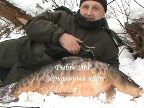 ловля карпа на москва реке видео