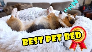 Bought Amazon's BEST Pet Bed for My Dog || Extra After College