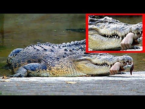 Những Vụ Cá Sấu Tấn Công Kỳ Lạ Và buồn Cười Nhất Thế Giới || Cuộc Sống Thực