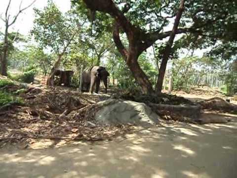 MOV00407.AVIThe elephant camp at Guruvayur.