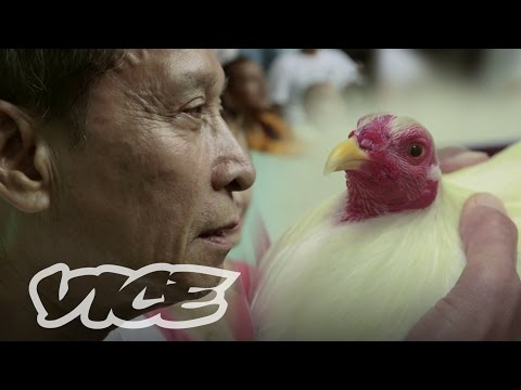The Billion Dollar Cockfighting Industry: Vice Intl (australia) video