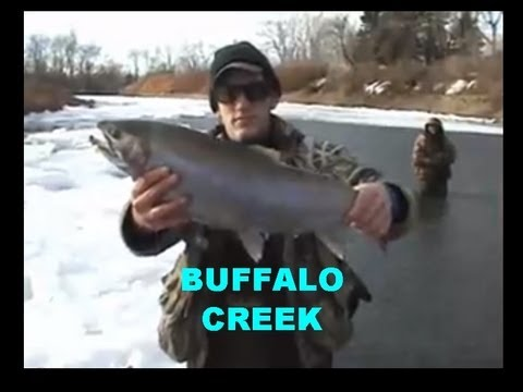 BUFFALO CREEK STEELHEAD