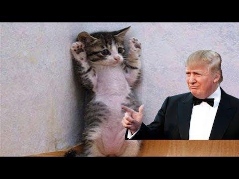 Kediler salatalık ve Trump korkuyorlar