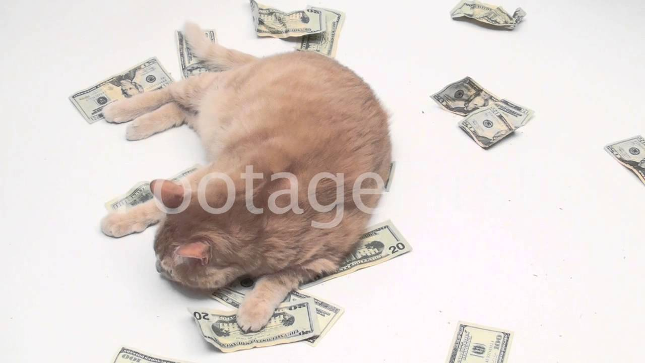 Cats Rolling in Money Fat Cat Rolls Around in Money