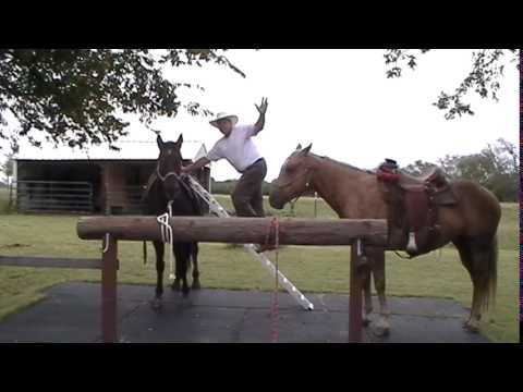 Crazy Man Abuses Horse - Why Stand Up or Climb On a Poor Horse?