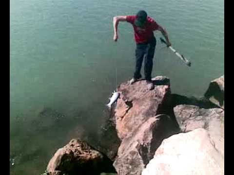 Pesca de mujol con arpon