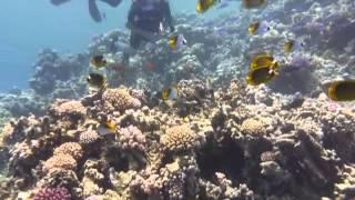 Egipt 2013 - nurkowanie koło wyspy Tiran