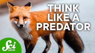 Predators & Prey   SciShow Talk Show