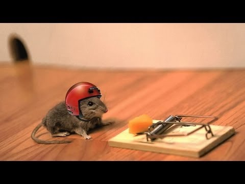 How to Make an Emergency Mouse Trap (Humane, No-Kill)