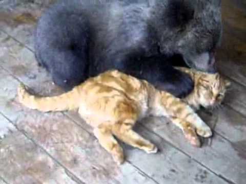 Thumb Bear Cub And Cat Are BFFs