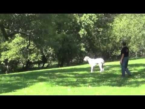 Alden's Kennels Pet Spa Training & Boarding Sleepy Hollow, IL.
