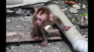 Baby monkey crying for mom, cuz mom is far away