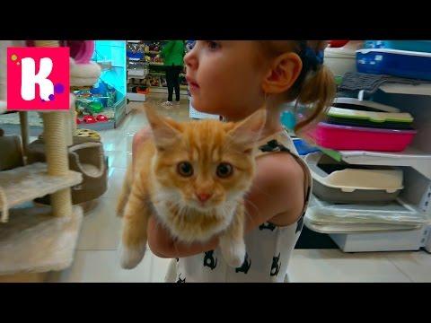 VLOG Кошечка Мурка с Катей в салоне красоты, грюминг, подарки от магазина для животных