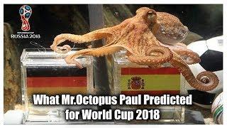 FIFA World Cup 2018 Octopus Prediction   Russia 2018 FIFA World Cup prediction