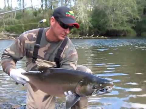 Humptulips River Salmon Fishing