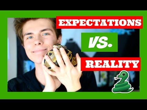 Expectations Vs. Reality of Having a Pet Snake!