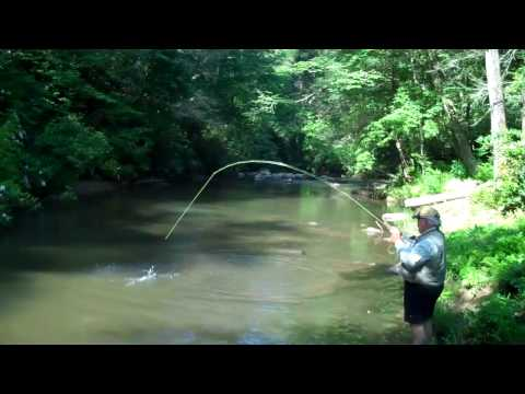 Trout Fishing in Murphy NC @ Vineyard Creek Estates