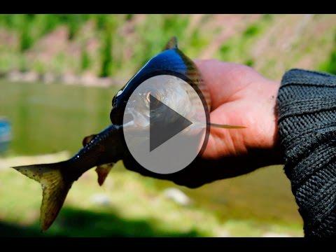 рыбалка на хариуса методы ловли