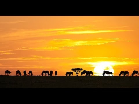 ► The Greatest Animal Migration (hd, Full Documentary) video