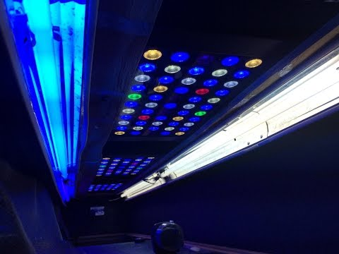 hybrid t5 led lighting upgrade saltwater tank coral reef update travel the world and