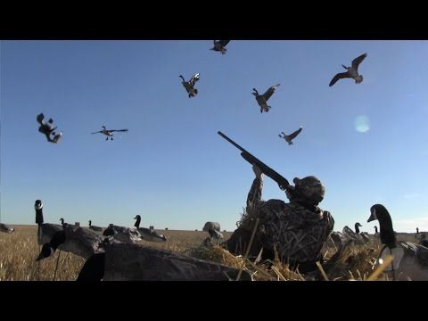 Canada Goose Hunt w/ White Rock Decoys - Honky Tonk Crowd