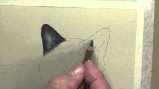 How To Draw Black Cat Ears