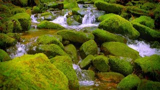 Mountain Stream Water Sounds White Noise for Sleep, Focus, Studying   10 Hours 4K