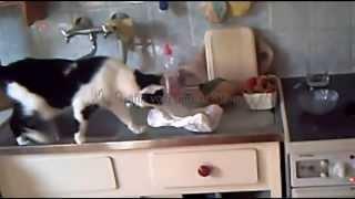 Bine Klaumeyer (Katze klaut Fleisch - Cat steals meat!)