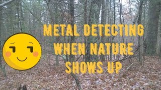 METAL DETECTING WHEN NATURE SHOWS UP