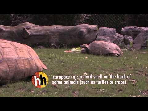 Homework Hotline Zoophily: Tortoise video