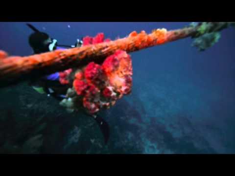 Undersea Cable  (秘密のポイント発見 笑)宮古島ダイビングビデオ