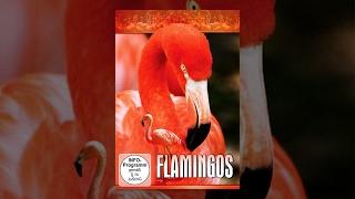 Flamingos - Das Leben der Flamingos