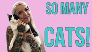 Visiting a MASSIVE Cat Shelter!