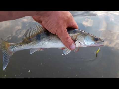 рыбалка с гидом на иваньковском