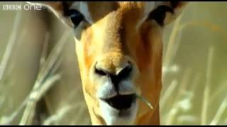 Funny Talking Animals - Special Best Of!