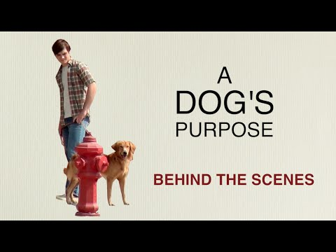 A Dog's Purpose: Behind The Scenes With Britt Robertson, K.J. Apa, Josh Gad, Lasse Hallstrom