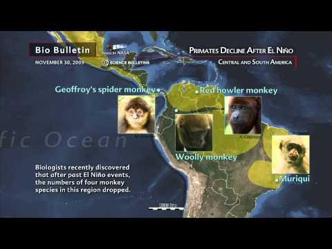 Science Bulletins: Primates Decline After El Nino
