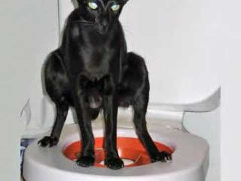 Can You Use Cat Litter For Dogs