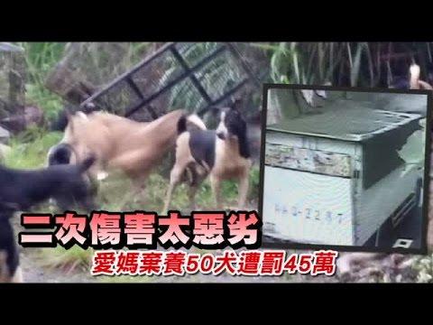 太惡劣!惡女棄養50犬遭罰45萬 | 台灣蘋果日報