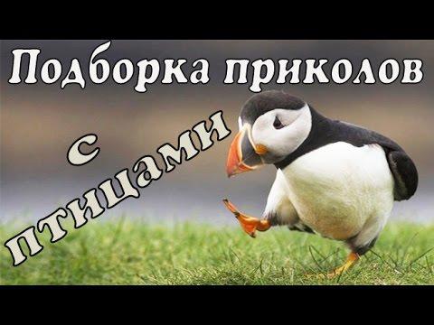 Приколы с птицами   Веселые птицы   Смешные птицы