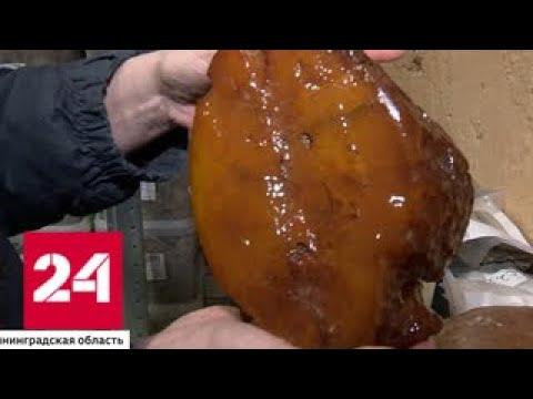 В Калининградской области добыли рекордные 450 тонн янтаря - Россия 24