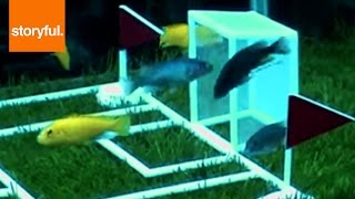 """Underwater World Cup"" Held In Shanghai Aquarium"