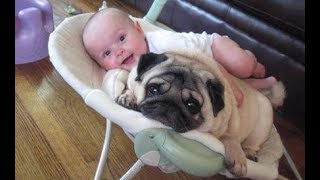 Những chú chó và em bé là đôi bạn thân - Chó con và em bé dễ thương